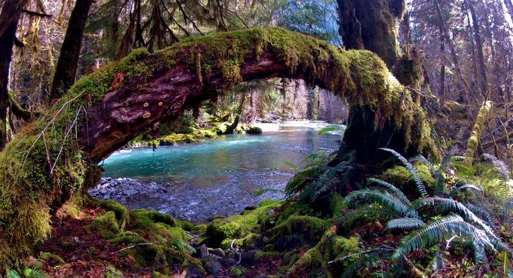 HIKE THE ENCHANTED VALLEY IN OLYMPIC NATIONAL PARK: Pictures and Video | Exotic Hikes Wilderness Experts