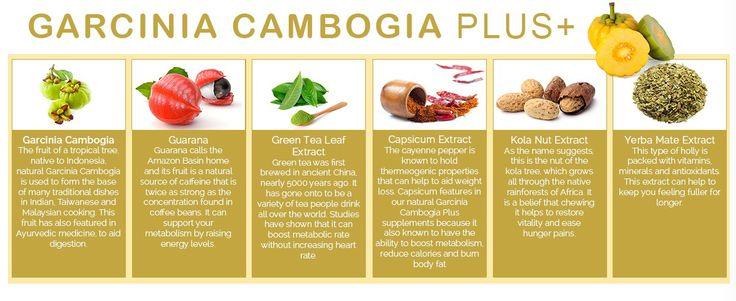 Garcinia Cambogia Plus Ingredients