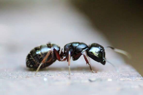 رؤية النمل في المنام كما ورد عن علماء تفسير الأحلام Ants Ant Infestation Pest Control