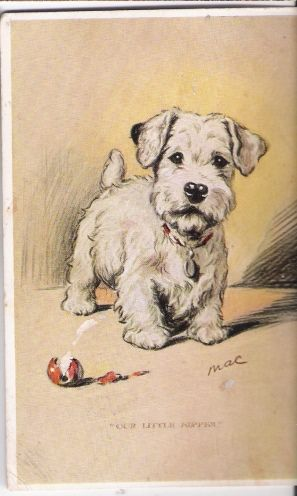 Dog-Terrier Puppy artist signed Mac.Lucy Dawson m662