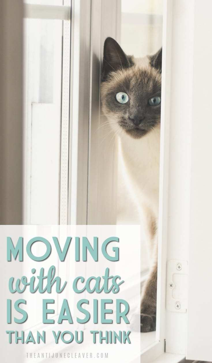 Moving Long Distance With Cats Is Easier Than You Think Moving