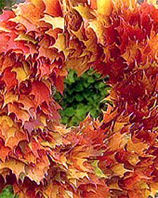 tvs0508.jpg Links to Martha Stewart Living on preserving fall leaves with glycerin for use in wreathes, etc. Gosh it is supposed to frost...and I don't think our leaves have started to change!