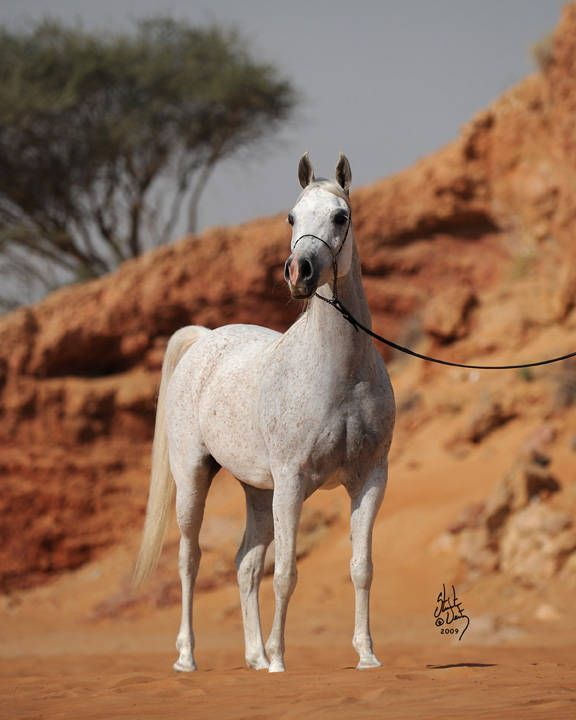 Ekonomika :: Dubai Arabian Horse Stud