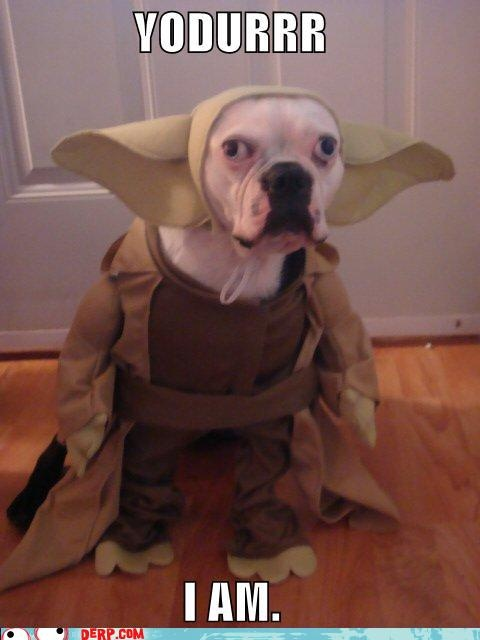 Dog Halloween Costumes Images