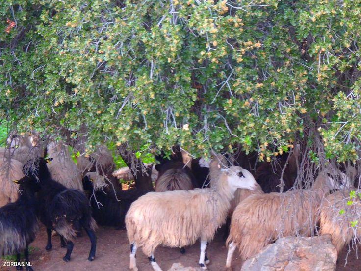 Informatie over wandelpaden kreta griekenland