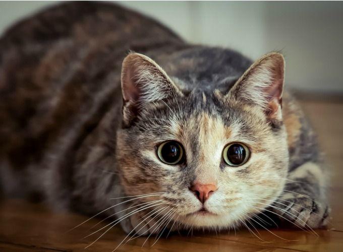 Voici 5 manières de divertir votre chat - Yummypets