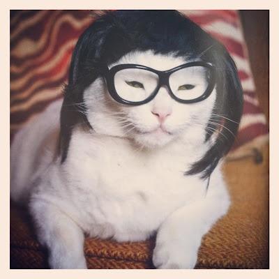 Wigs For Kitties 92