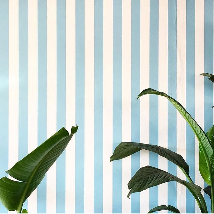 Stripes and banana leaves, best || photo @story_of_us