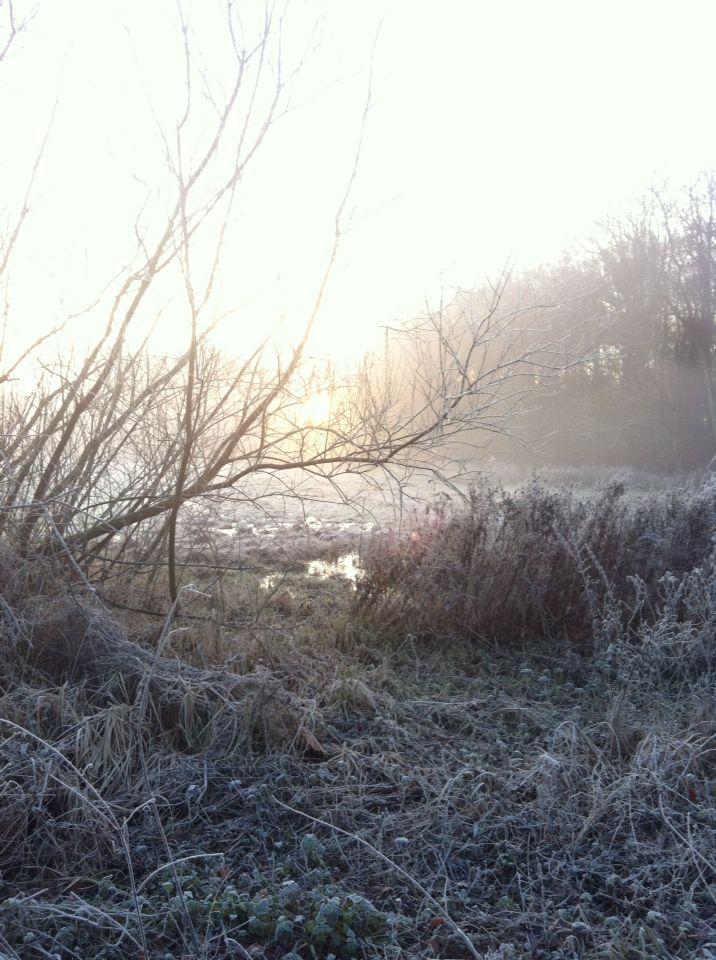 Winter morning walks