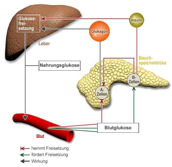 Ursachen & Risikofaktoren » TypDiabetes » Krankheiten » Internisten im Netz »