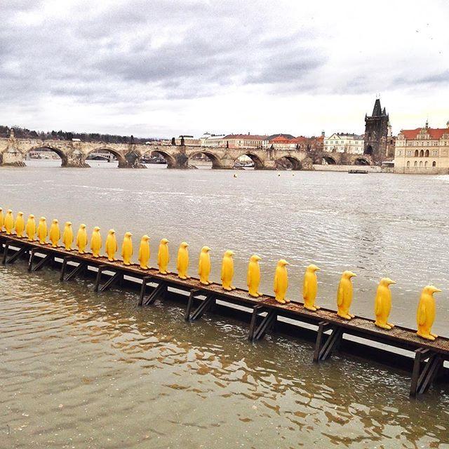 Современные  памятники  органично вписываются в атмосферу старинной Праги. Марш пингвинов через Влтаву заряжает энергией даже в самый пасмурный день)  А Вы любите необычные современные скульптуры?…