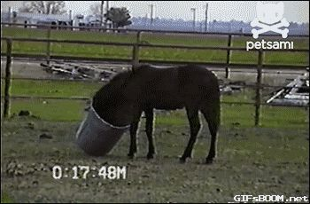 21 Best GIFs Of All Time Of The Week #92