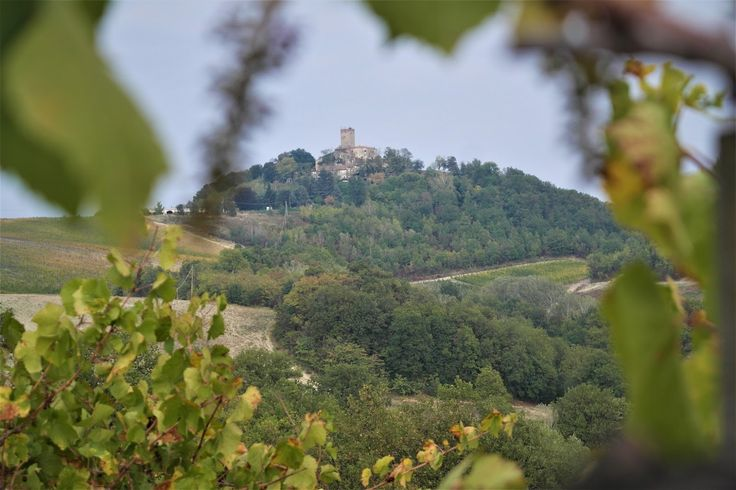 Il viaggio enoico di un wine blogger alla ri-scoperta dell'Oltrepò Pavese tra territori, vini tipici, vitigni autoctoni ed internazionali e grandi vignaioli