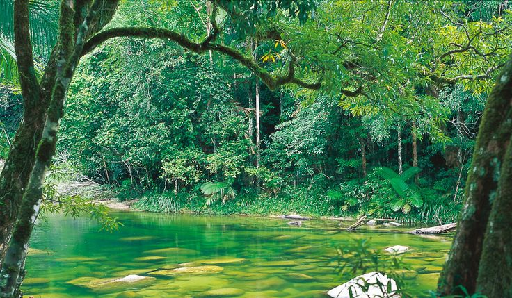 The gorge-ous Mossman Gorge #daintree #tropicalnorth #queensland