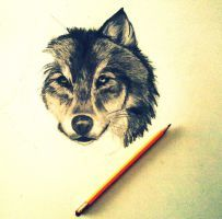 Wolf-Sketch by IlariaBertolo