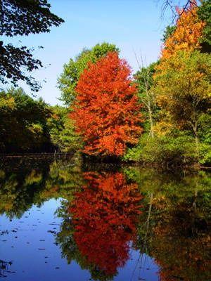 This fall foliage photo was taken along the Nashua River in Nashua, New Hampshire.