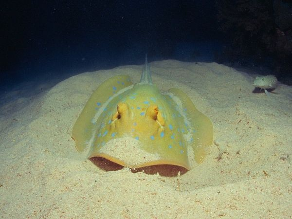 Still to Dive at Ras Samadia, Egyptian Red Sea