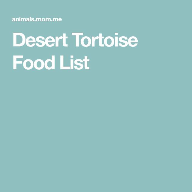 Desert Tortoise Food List