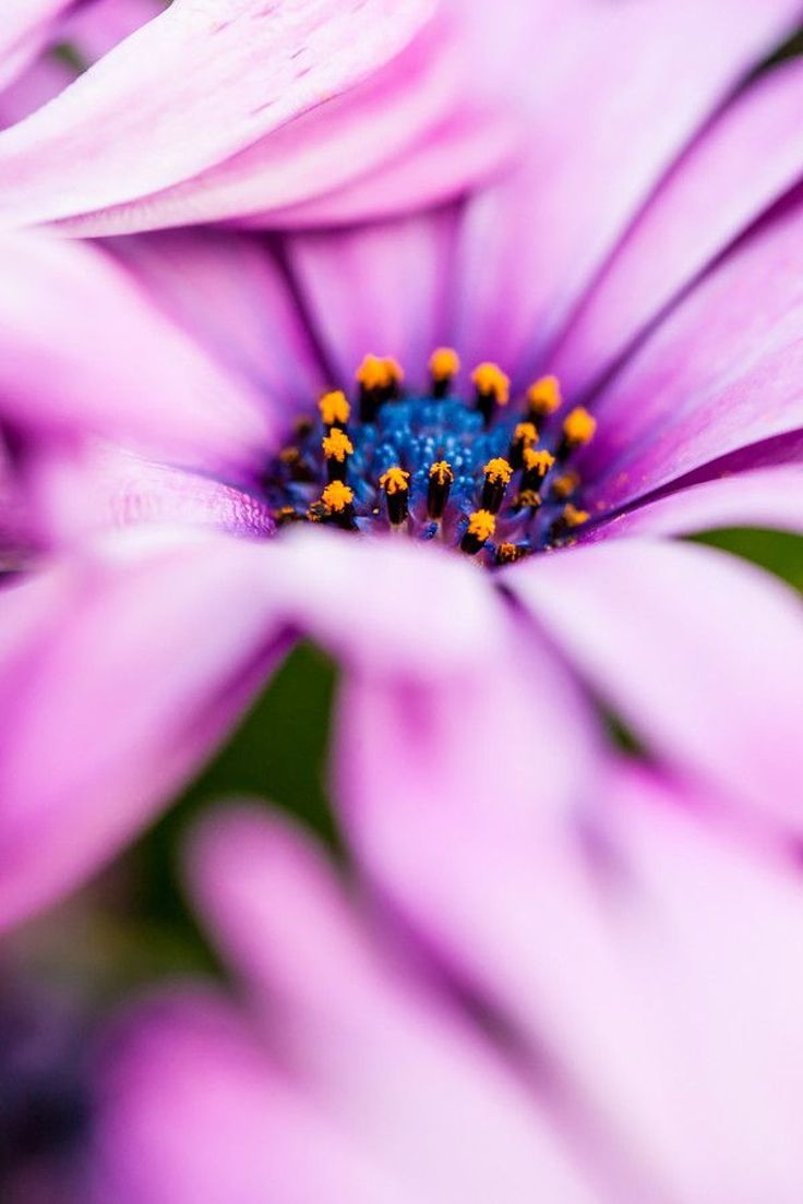 Best 25 wonderful flowers ideas on pinterest tough as nails best 25 wonderful flowers ideas on pinterest tough as nails different types of flowers and cornflower flower pictures dhlflorist Images