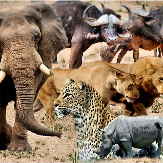 what animals make up the big 5