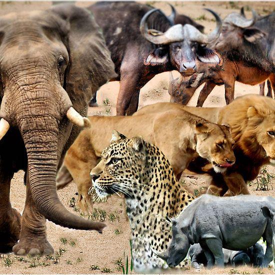 AFRICA'S BIG 5 - DIE GROOT 5