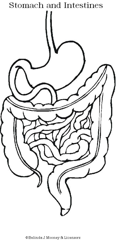 elementary body systems coloring pages - photo#40