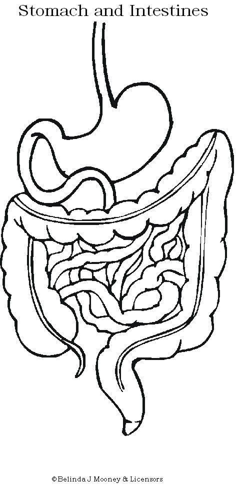 Digestive System Human Body Unit Pinterest We
