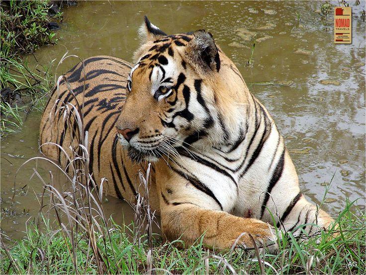 Kanha National Park #Checklist #Wildlife #travel