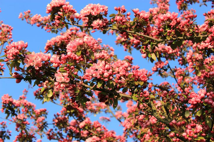 Blossom time!   Flickr - Photo Sharing!
