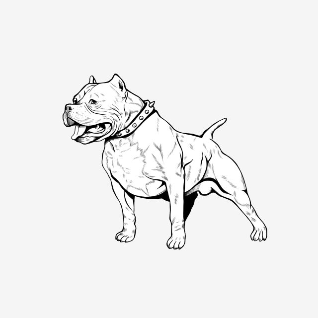 Handdraw Lineart Pitbull Standing Png And Psd Pitbull Drawing Pitbull Art Dog Drawing