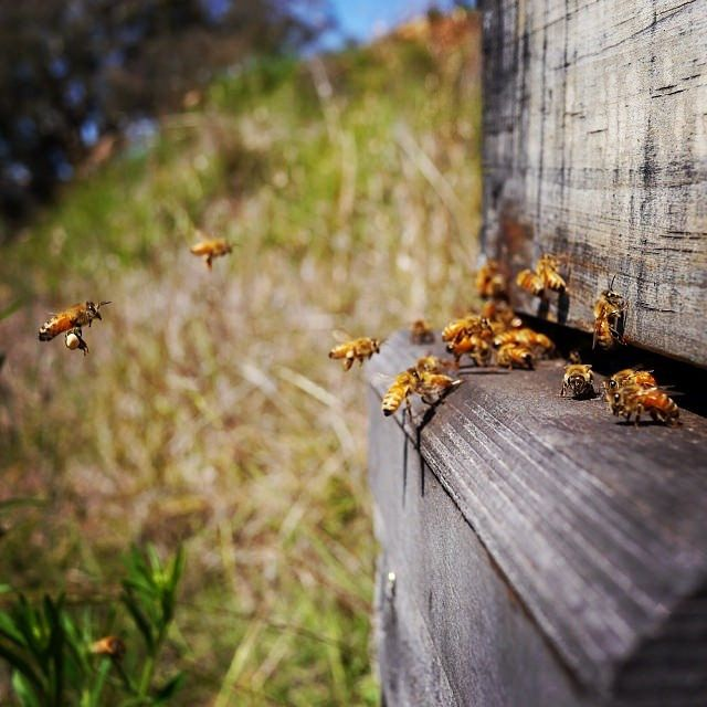 35 best bee keeping images on pinterest stingless bees bee free ebook beekeeping for all natural beekeeping australia ee fandeluxe Ebook collections