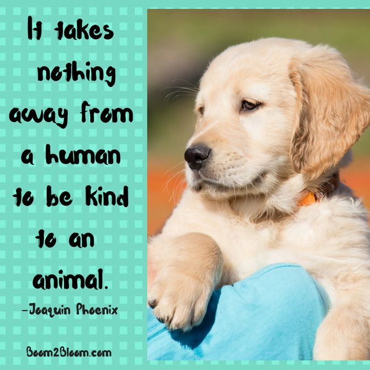 Animal Abuse Quotes By Famous People: Best 25+ Cute Dog Quotes Ideas On Pinterest