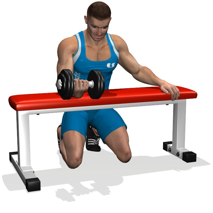 PALMS UP DUMBBELL WRIST CURL OVER A BENCH INVOLVED MUSCLES DURING THE TRAINING FOREARMS