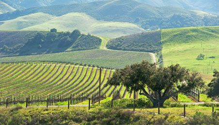 Weekend Getaways to Paso Robles, CA from San Francisco or Los Angeles | Fodor's Travel Guides