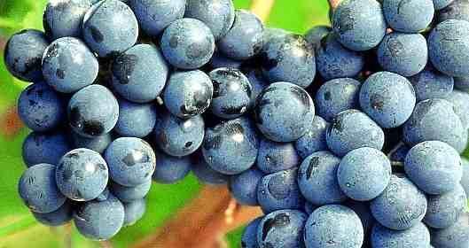 Il Sagrantino di Montefalco è sinonimo di vino umbro. La zona di produzione del Sagrantino comprende i comuni di Montefalco, Giano, Bevagna, Gualdo Cattaneo...