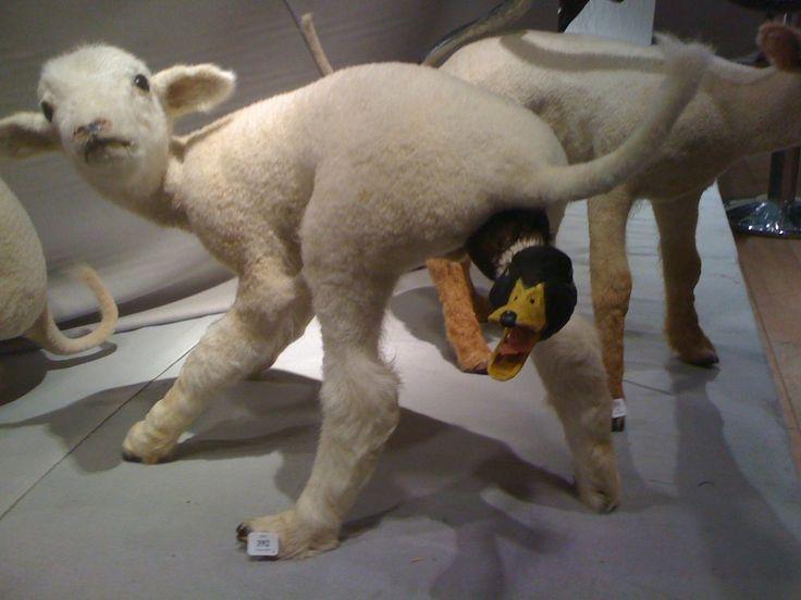 Que pensais de los porros? - Página 5 7bdb9b3b3c7a7b0cf3ff8149b5649a8c--bad-taxidermy-lamb