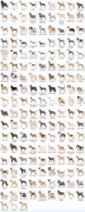 dog breeds by k