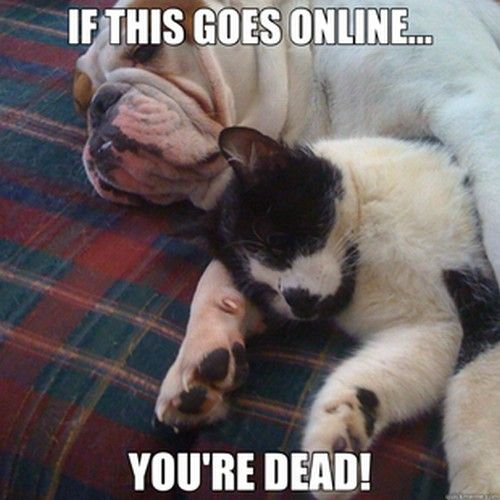 Funny Jokes About Dead Cats