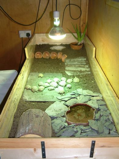 Sue's Tortoise Table - Made from