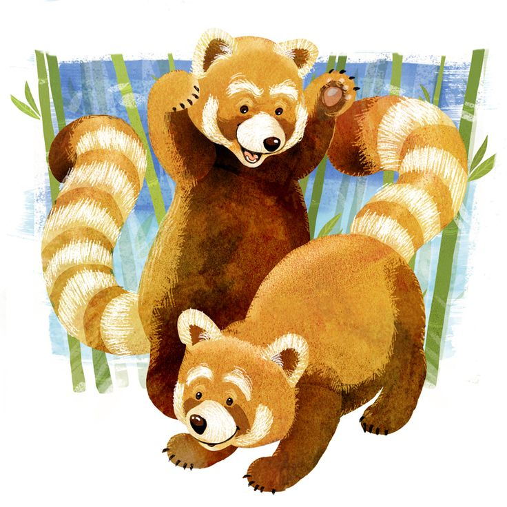 Our pouncing Red Panda for Animal Alphabet on Twitter.