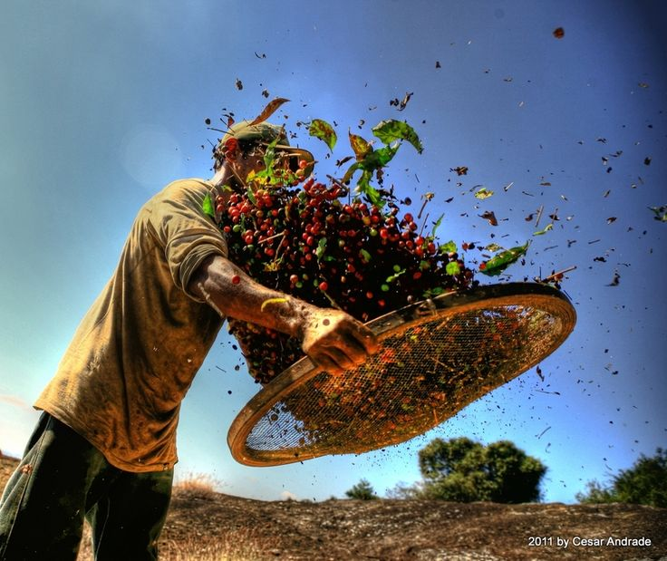 500px / Photo Coffee worker by Cesar Andrade