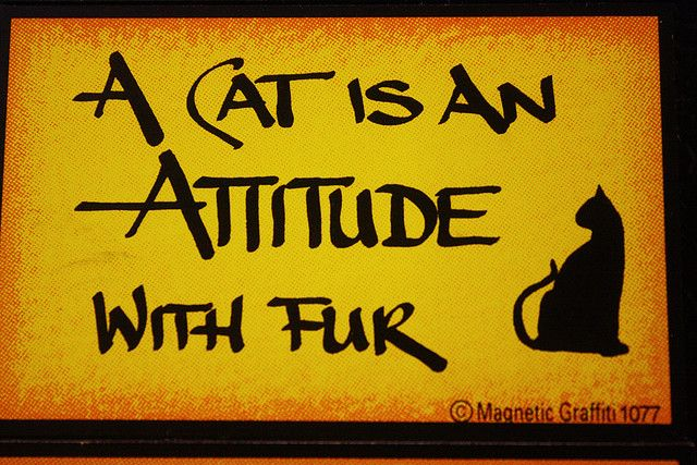 A cat is an attitude with fur. True!