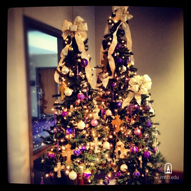 beautiful purple and gold christmas trees in the executive office at umhb photo by