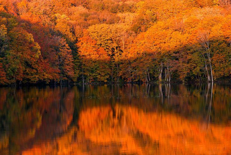 「紅葉と蔦沼の日の出紅葉と蔦沼の日の出」のフリー写真素材