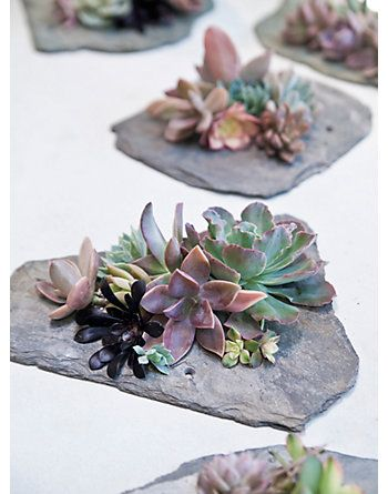 """CENTERPIECE IDEA: Pretty Wedding DIY Centerpiece of Succulents on a Piece of Slate - - get MORE ideas in the PDF """"663 Must-Have Wedding Ideas"""" at www.oliverink.etsy.com"""