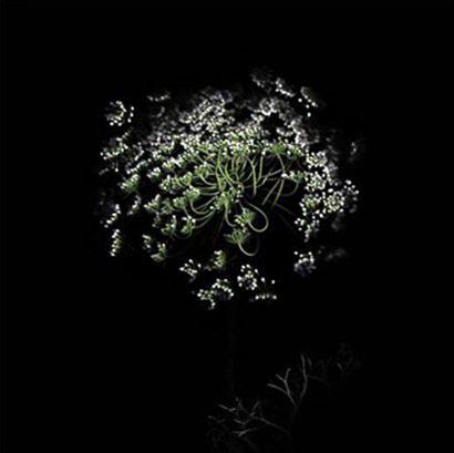 Clare West - scanography - scannography - ScanArt - Scanner Art