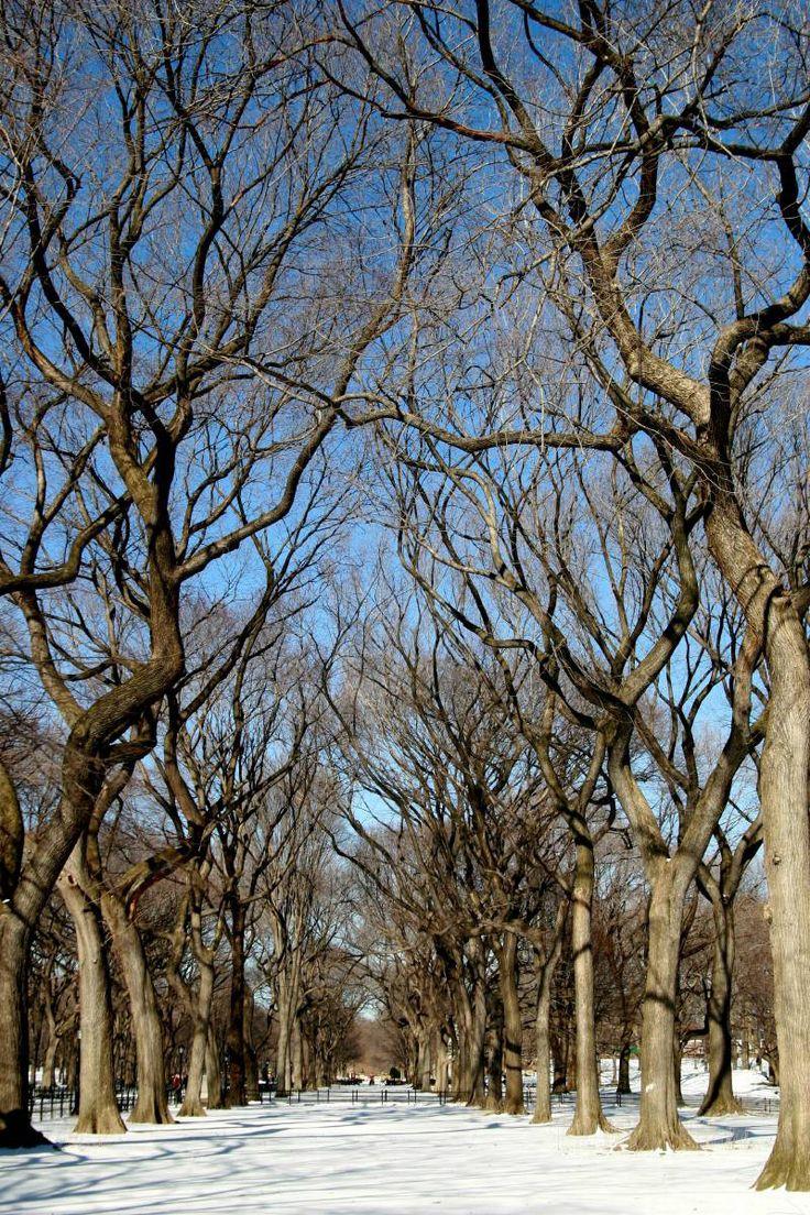 Nova York em Janeiro e Fevereiro – 5 Razões pra Visitar a Cidade no Inverno