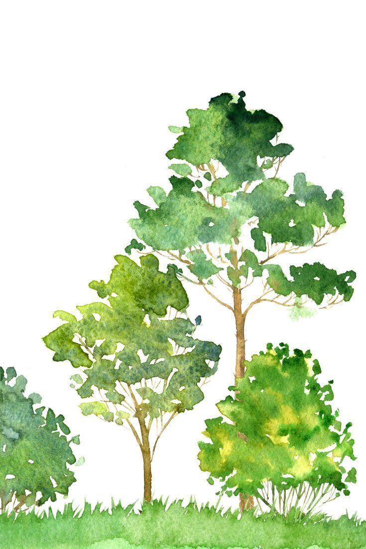 (Aquarellgrundlagen) Zeichnen von Bäumen mit Schuppen- und Streutechniken /   '…