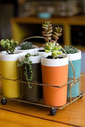 Indoor Garden idea - A holder of Succulents in colorful cups/containers. Indoor