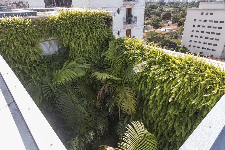 Gallery of Jardim Paulistano Penthouse / Gabriella Ornaghi Arquitetura da Paisagem - 6